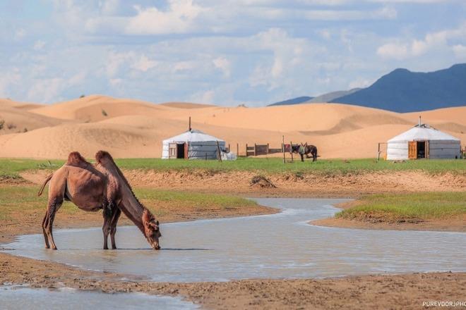 Mongolian Semi Gobi