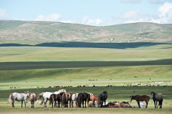 Mongolian country